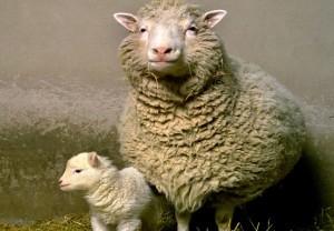 Dolly the Sheep vs Mega Millions the lottery